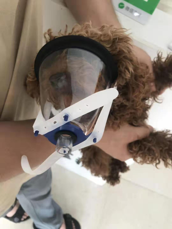 veterinary Anesthesia mask